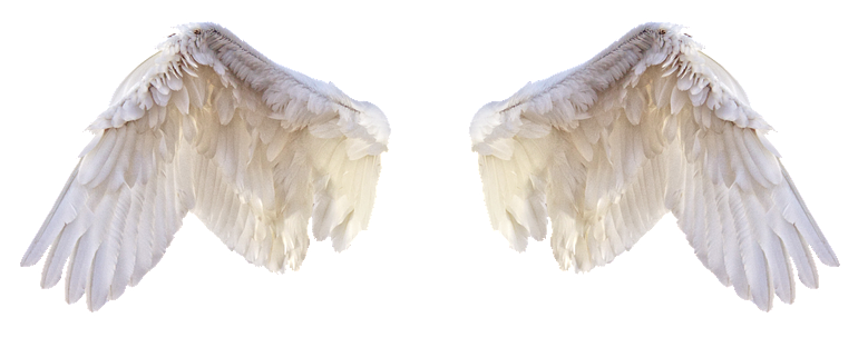 """Wings of an angel for """"Angels in America"""""""