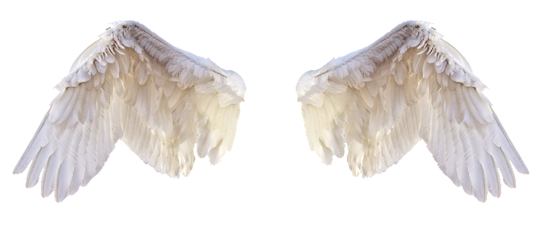 "Wings of an angel for ""Angels in America"""