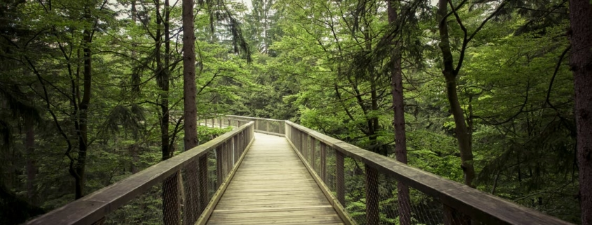 "Bridge in the forest for play ""Small Mouth Sounds"""